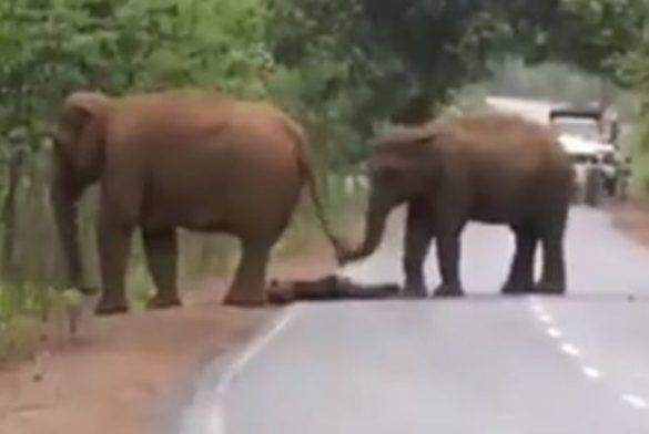 funeral elefantes