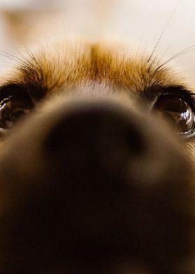 Día Del Perro Mejor Amigo Del Hombre